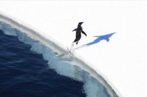 Degelo da Antartica e 10 vezes mais rapido