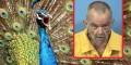 Homem é detido após abusar de pavão