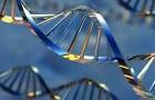 Cientistas alteram código genético de ser vivo