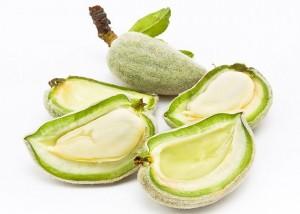 Conheça quais os alimentos venenosos que liberam toxinas fatais-4