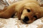 Conheça receitas caseiras para cuidar do seu cão